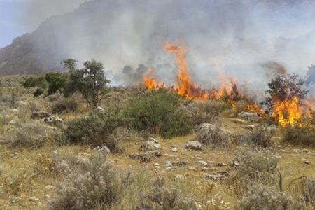 35 هکتار از مراتع شازند در آتش سوخت