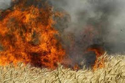 کشاورزان حق آتش زدن مزارع را ندارند