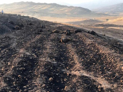 فاجعه آتشسوزی در اراضی کهگیلویه